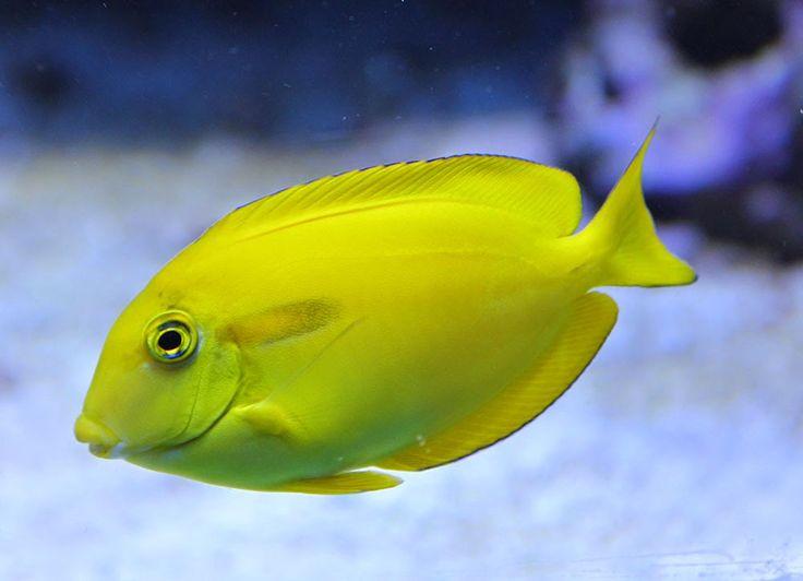 Särkänniemen Akvaariossa uiskentelee värikkäitä kaloja. Särkänniemi Aquarium, #tampere #särkänniemi, visit: http://www.sarkanniemi.fi