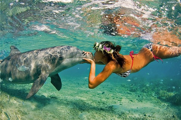 Неразгаданные тайны дельфинов!