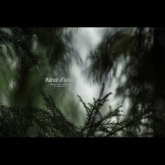 【akimuro9988】さんのInstagramをピンしています。 《深い悲しみ色  #自然 #風景 #雨の日 #森 #雫》