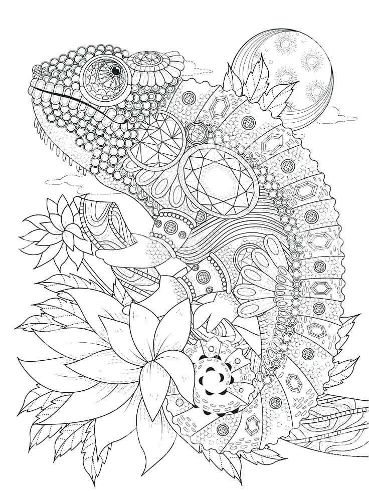 Chameleon Coloring Pages Best Coloring Pages For Kids Animal Coloring Pages Mandala Coloring Pages Coloring Pages