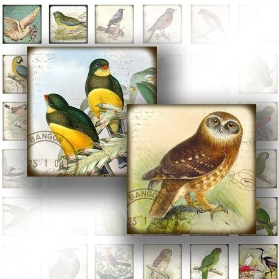 1 x 1 digital collage sheets for scrabble tiles jewelry making paper supplies art scrabble tile image Victorian birds