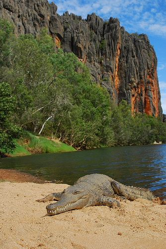 Freshwater Crocodile (Crocodylus johnstoni) with the beautiful Winjana Gorge, Kimberlys, Australia.