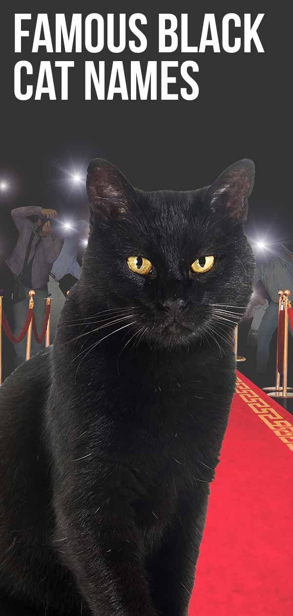 Famous Black Cat Names How Many Do You Recognize In 2020 Cat Facts Cat Names Names For Black Cats