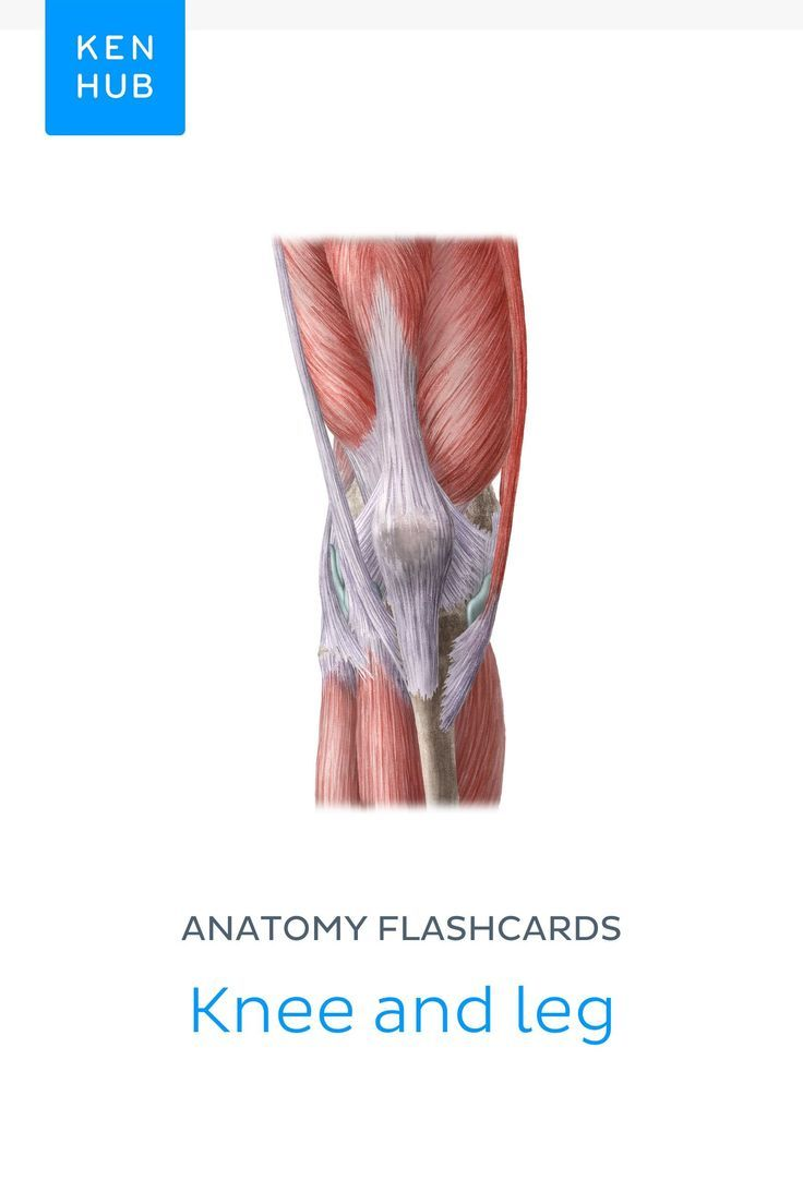 Check Out Our Anatomy Flashcard About The Knee And Leg And Become