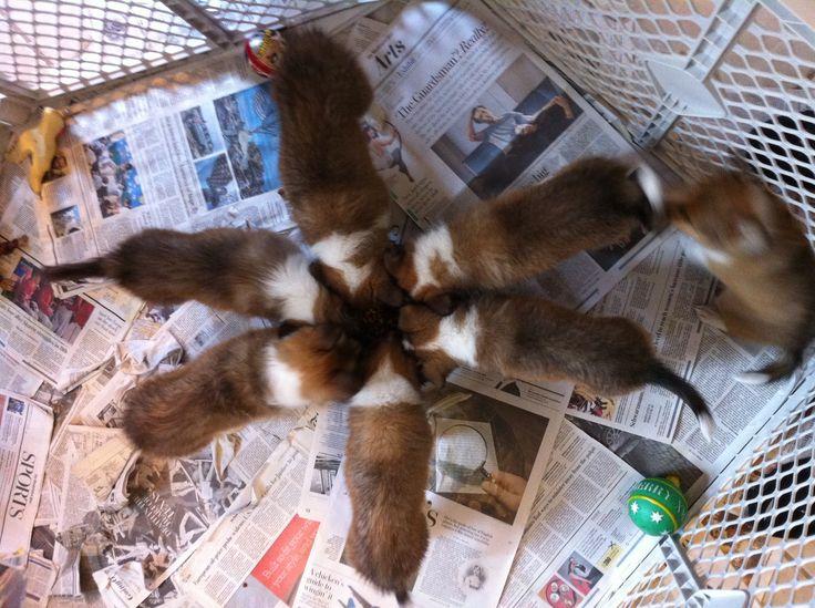 Litter sitting 8 puppies...a bucket list item fulfilled!