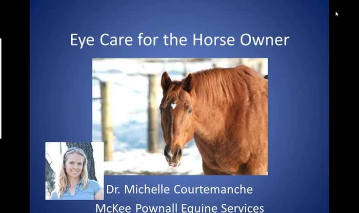 In this recorded webinar Dr. Michelle Courtemanche discusses eye care basics for the horse owner. Enjoy!