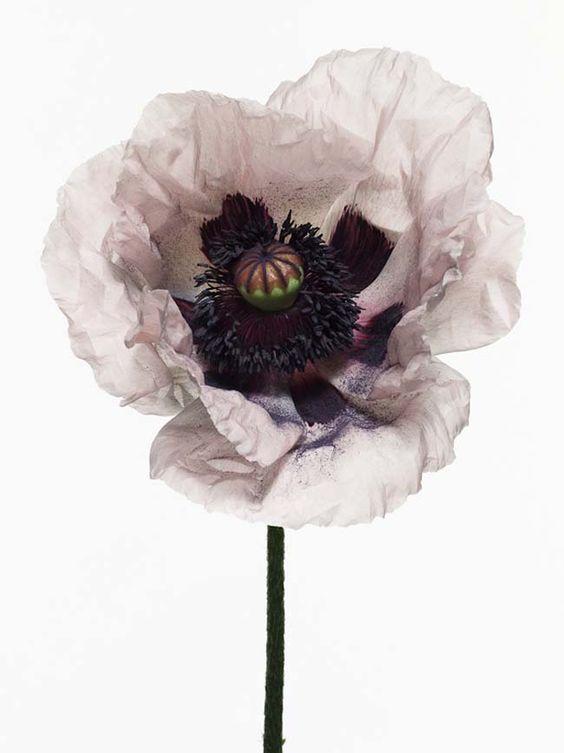 Aubergine tints / Floral inspiration