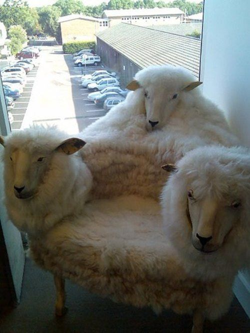 It would come alive at night and eat your face off.  But it would be very comfortable.: Sheep Head, Oddities, Taxidermy, Sheep Chairs, Sheephead, Funny Stuff, Furniture, Weird, Wtf