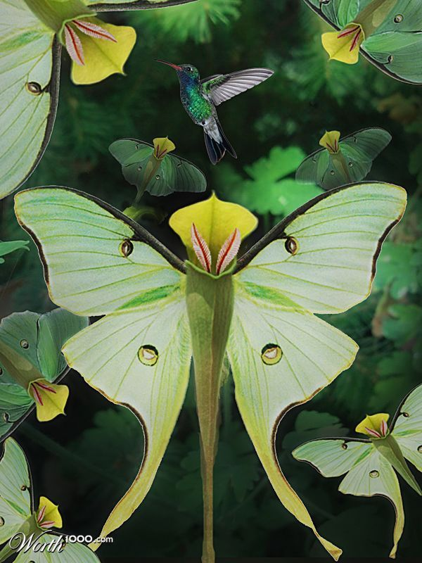 The pitcher plant - looks like a butterfly! It's so beautiful....you hardly notice the Hummingbird.