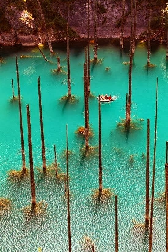 14 of the strangest looking forests on the planet (33 HQ Photos)