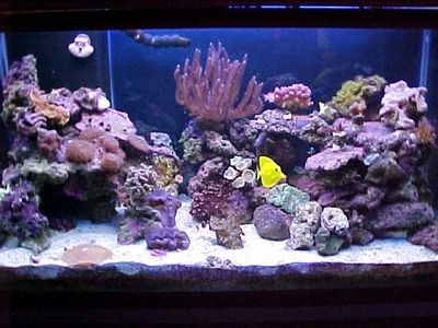 Aquascaping Ideas | Aquarium Decoration Ideas on Aquascaping Ideas Practical Fishkeeping ...