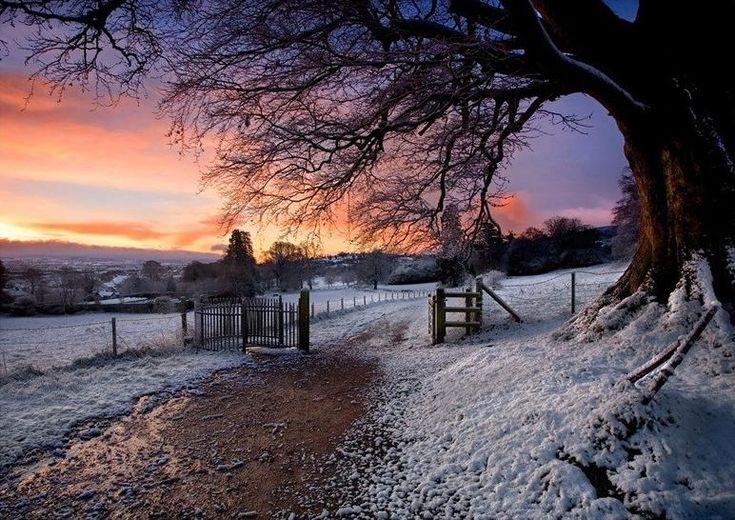Winter Sunrise - Derrymore Woods, Northern Ireland - Gary McParland @ TrekEarth - Pixdaus