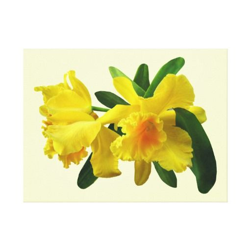 Yellow Cattleya Orchids Gallery Wrap Canvas