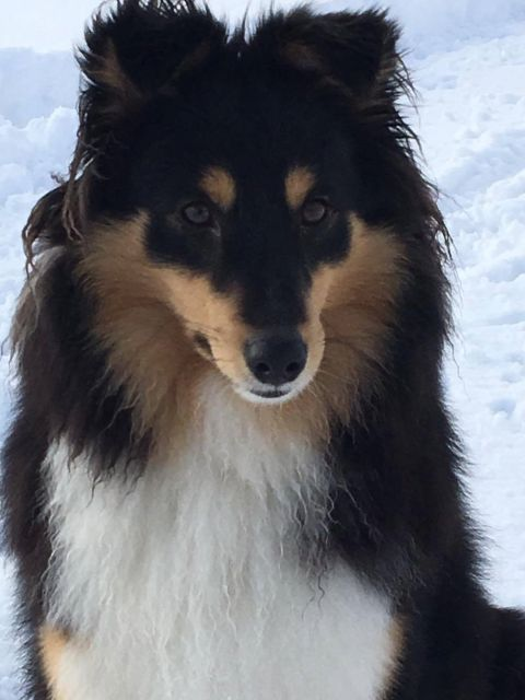 FINN – Hunder, Hordaland, Torget