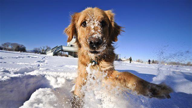 Maltraitance animale : attention au temps froid | ICI.Radio-Canada.ca