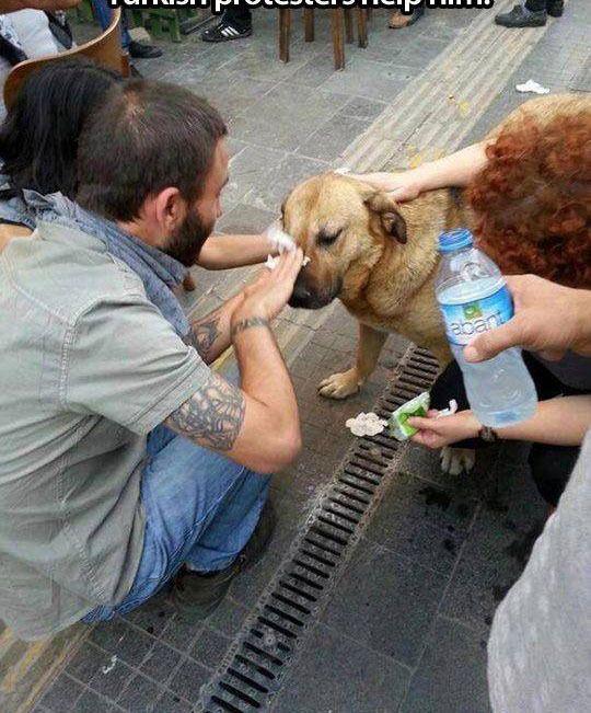 Fotos Conmovedoras de Humanos ayudando a Animales