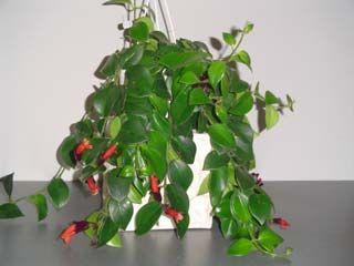 Les 25 meilleures id es de la cat gorie plantes for Plantes vertes retombantes