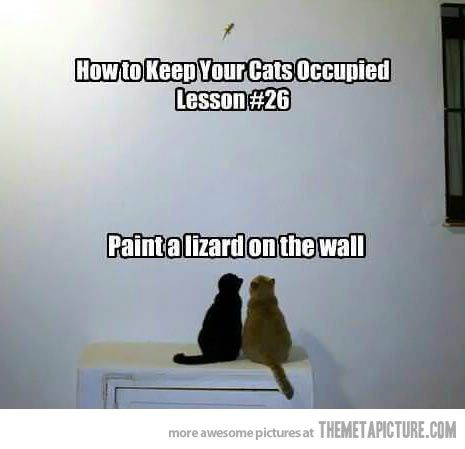 How to keep your cats occupied… a small indent in the wall works just fine for mine.