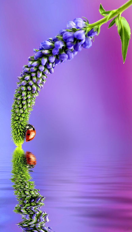 Halte dich schön fest kleiner Käfer, nicht dass du ins Wasser fällst! Huhu ... das könnte nämlich so kalt sein.