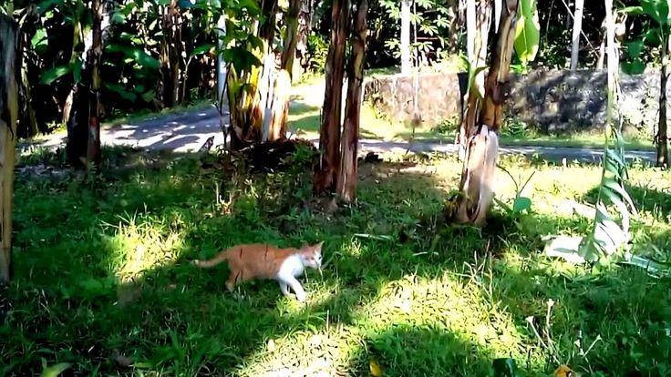 Aksi Kucing Yang Sangat Lucu - Very cute cat action