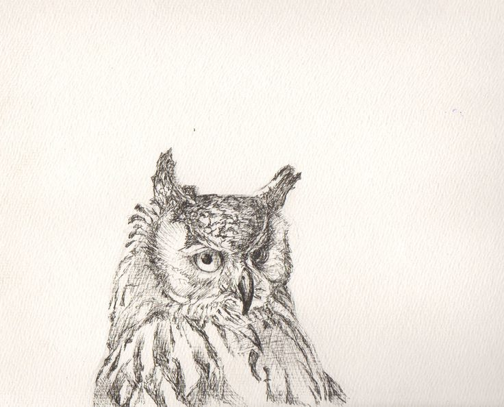 An owl I drew with fine liners on textured watercolour paper.