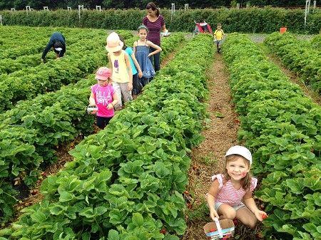 En plus des fraises, des framboises et des bleuets, La ferme à Frédérique, située en #ChaudiereAppalaches, cultive une grande variété de légumes et cuisine sur place de délicieux produits maison dans le respect des recettes traditionnelles...