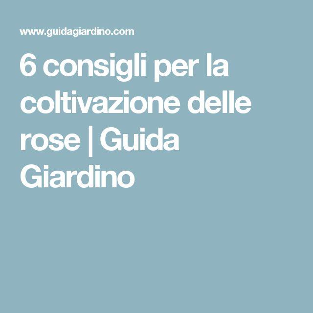 6 consigli per la coltivazione delle rose | Guida Giardino