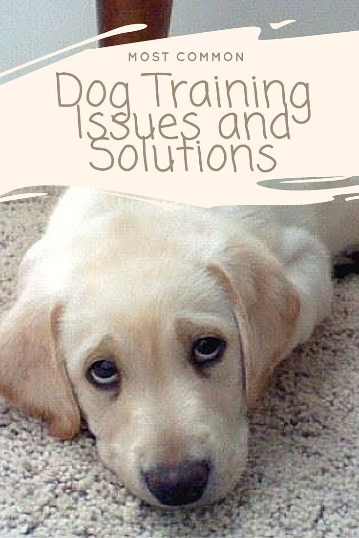 How To Solve These Common Dog Training Issues…