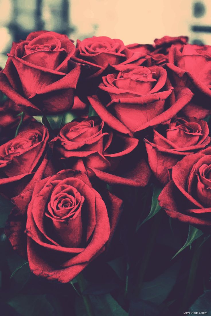 White And Red Roses Tumblr