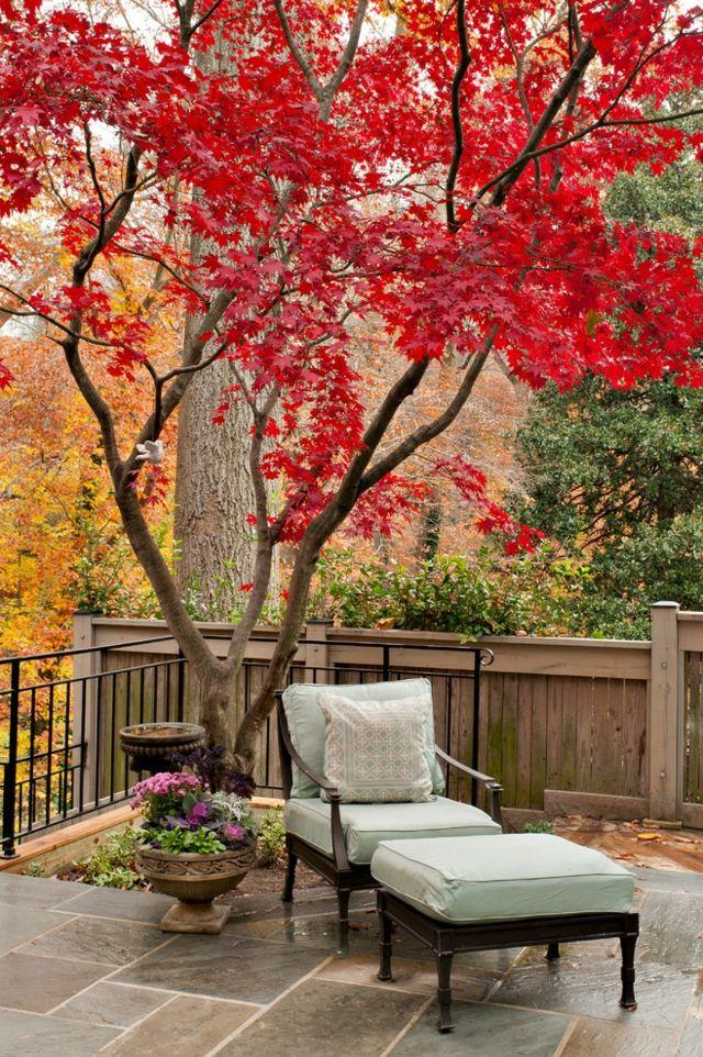 Kleingarten exotische Baumarten Sitzfläche Zaun klien Gärten