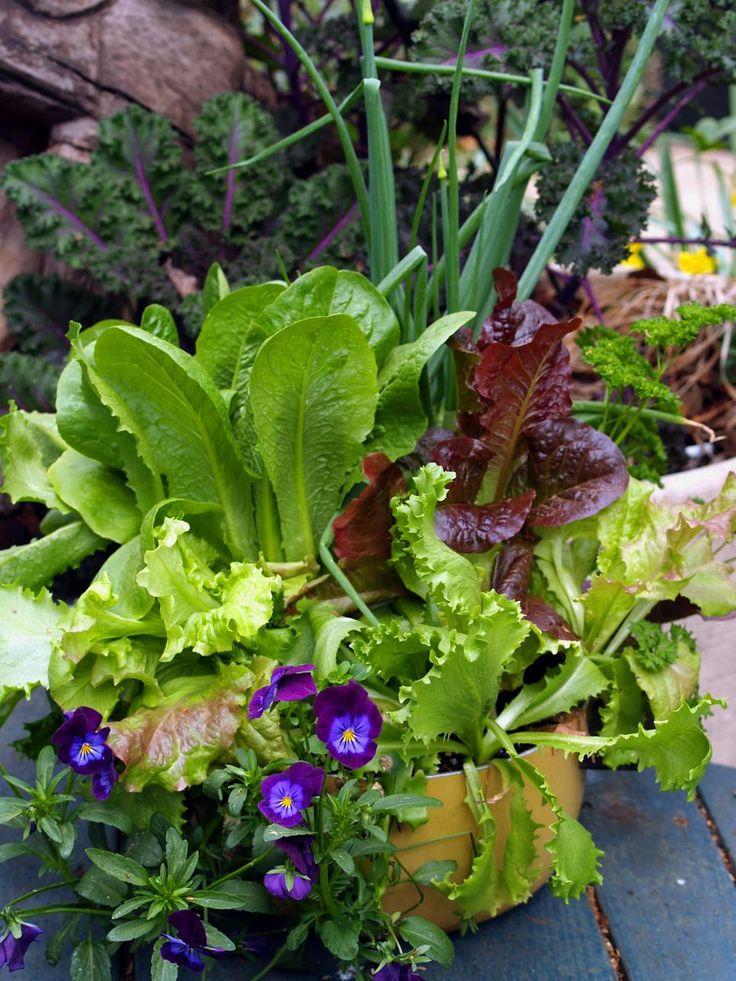 How To Design A Beautiful Edible Garden Planting Vegetables Edible Garden Vegetable Garden Design