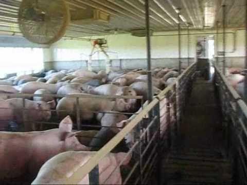 Taylor Farms Pork Tour