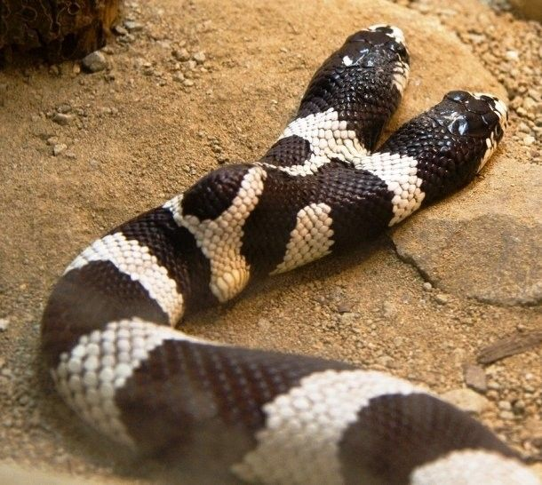 25+ best ideas about Facts about snakes on Pinterest | Australia ...
