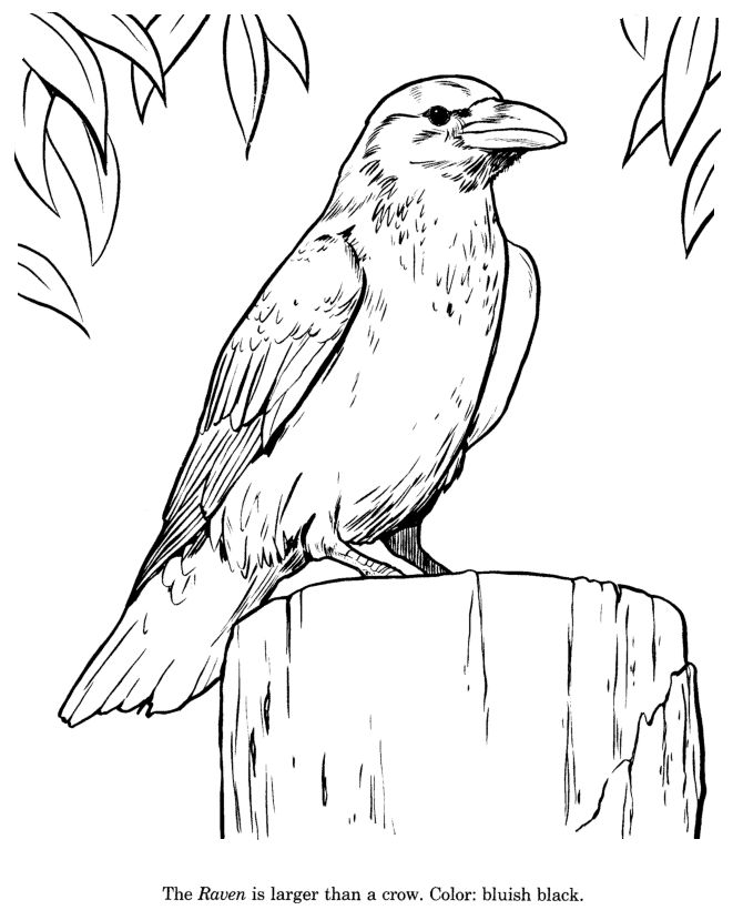 free wild birds coloring pages - photo#14