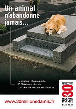 Stop aux abandons d'animaux cet été  ( voir aussi, podcast, Petits Citoyens, le 21 juin 2012 : http://soundcloud.com/laquotidienne/l-mission-du-21-juin-2012 )