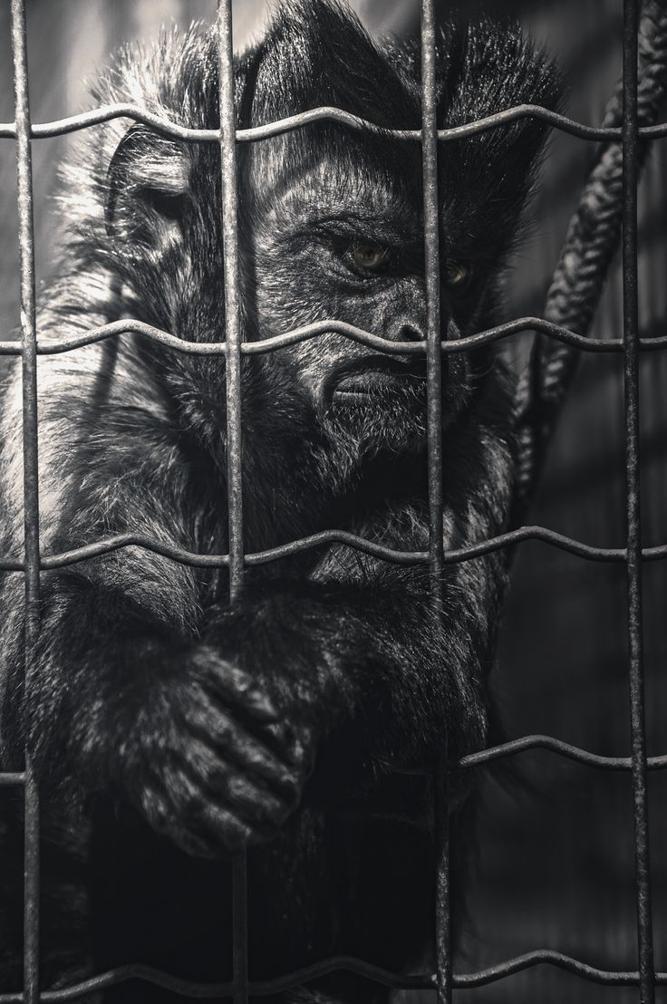 Prisoner by TasosKDs on 500px