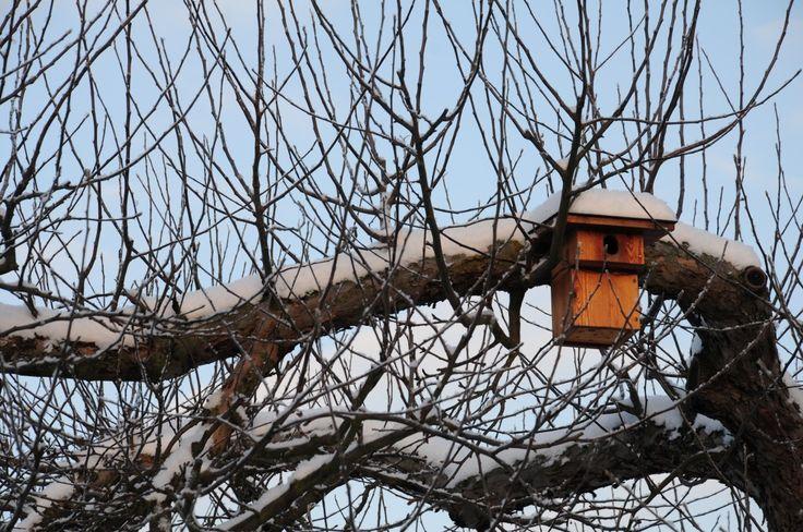 puu, haara, lumi, talvi-, loki, kevät, valaistus, kausi, rinta, oksat, pesä, hautomo, lintu syöttölaite, nesting box, pesintä help, starenkasten, puumainen kasvi, ulkona rakenne