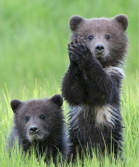Hey Let's give a hand to Mama Bear!!! Ya hoo!!