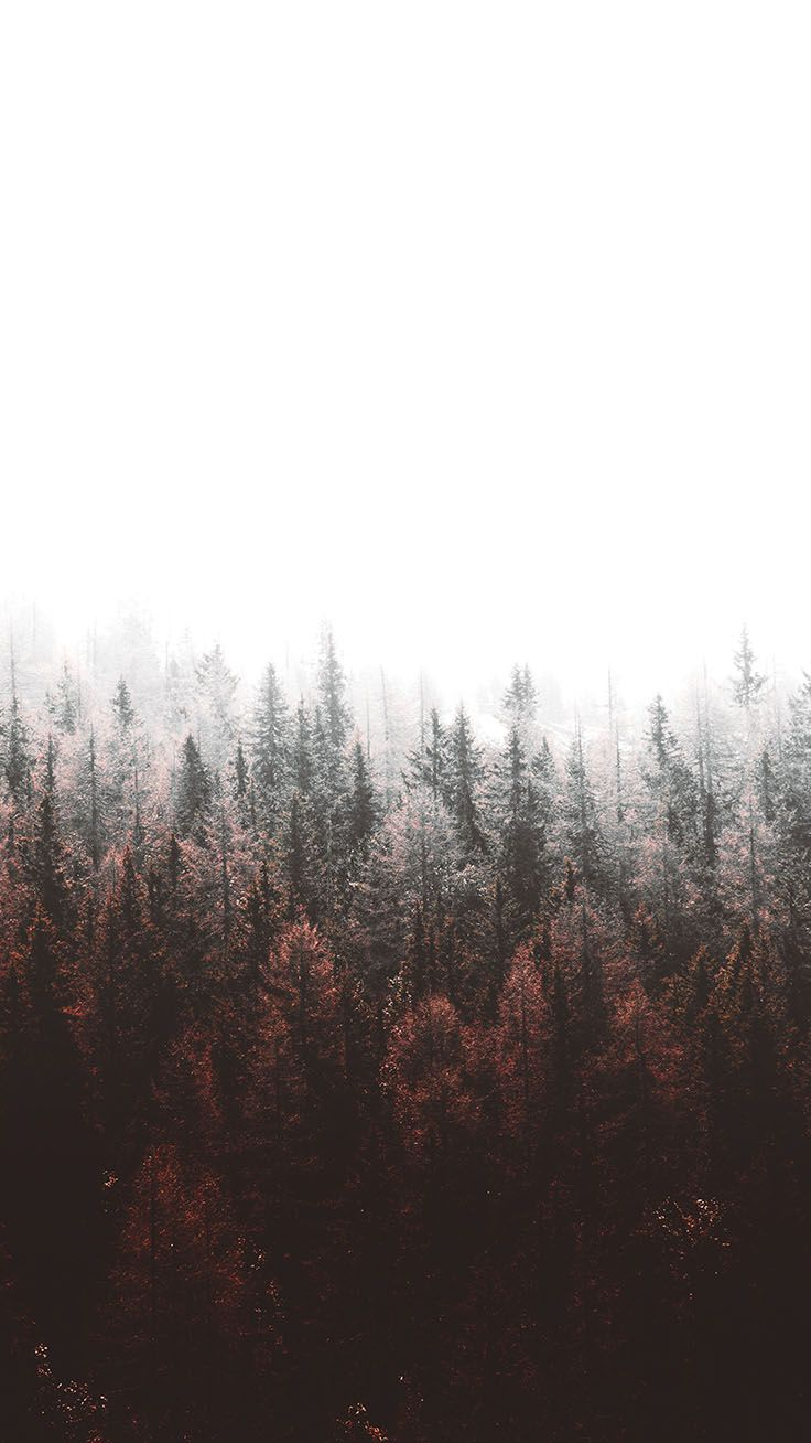 Bringing The Forest To You With 9 Free Iphone X Wallpapers Forest Wallpaper Nature Wallpaper Preppy Wallpaper