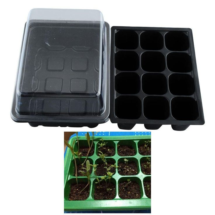 12 Cell Seed Tray with Lid and Insert