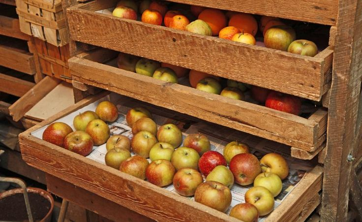 Im Herbst tragen die Apfelbäume reichlich Früchte – doch wie werden die Äpfel möglichst unbeschadet geerntet, damit sie anschließend über einen längeren Zeitraum gelagert und weiterverarbeitet werden können? Wir zeigen Ihnen, wie Sie Äpfel richtig ernten und lagern.