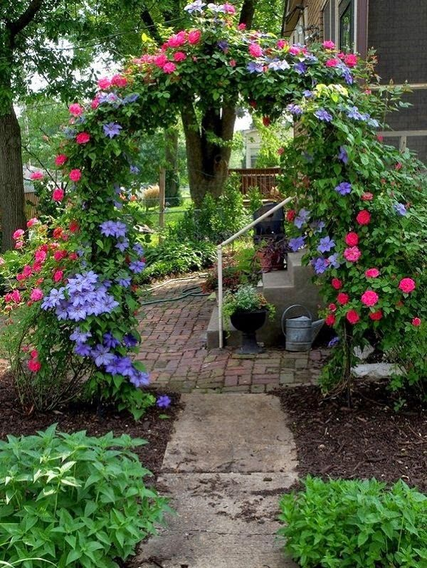All You Need To Know About Growing Clematis in Your Garden!!