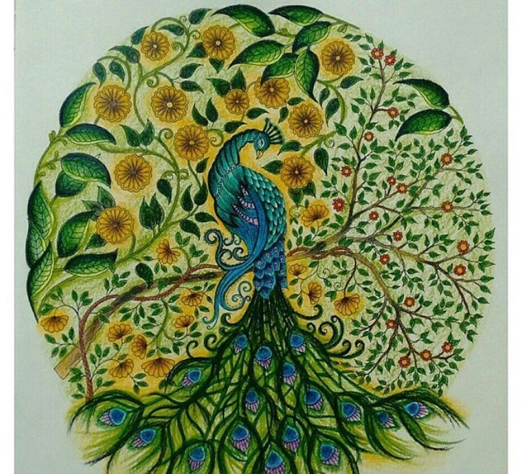Secret Garden Coloring Book Artist Edition Best Images About Peacock Pavo