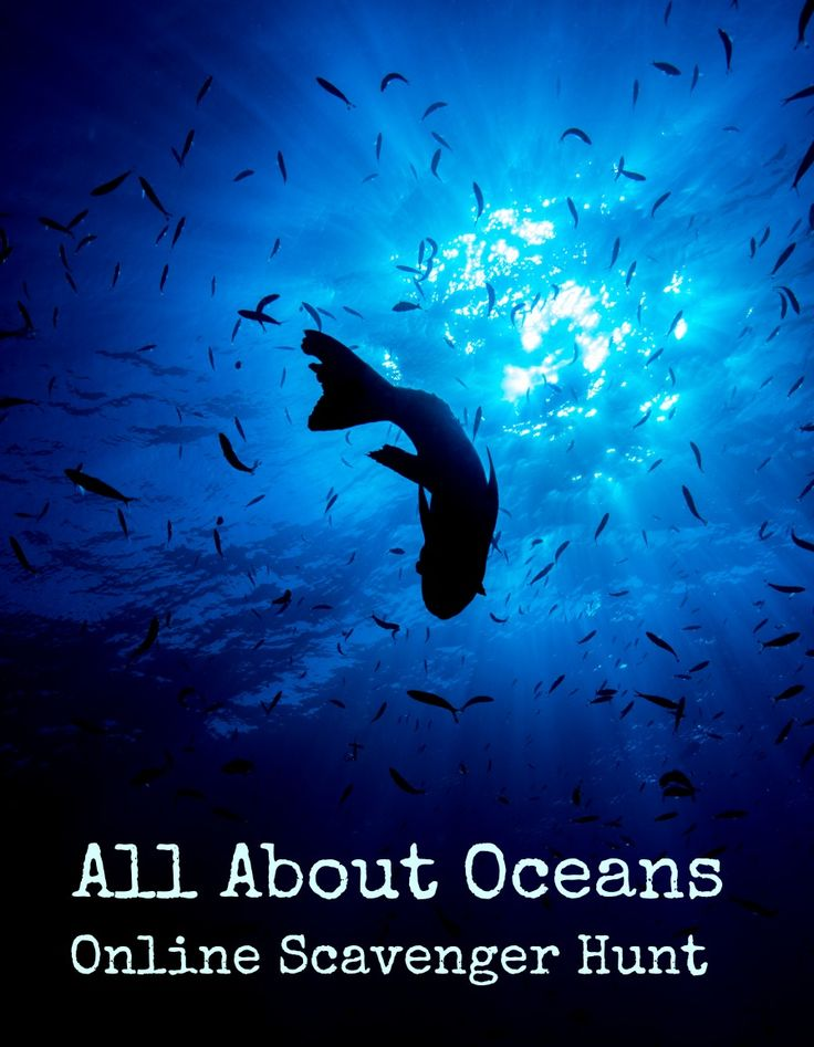 On-line Exercise: All About Oceans Scavenger Hunt