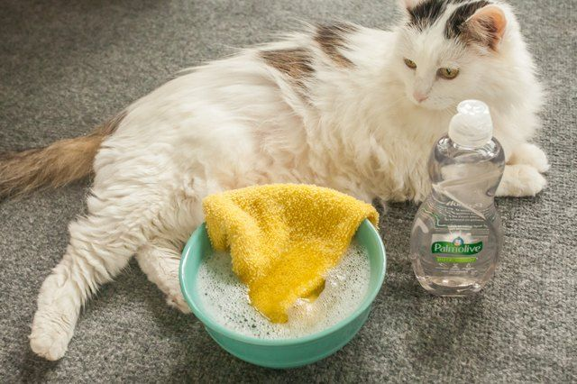 Get Cat Urine Out Of Luggage Flea Shampoo For Cats Cat Fleas