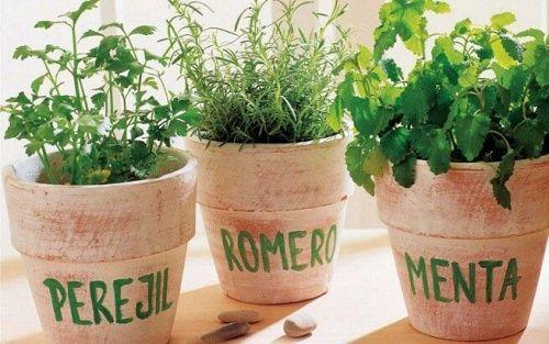 ¿Te gustan las plantas? Te proponemos cinco plantas que, además de adornar, son el condimento que no puede faltar en ninguna cocina: Perejil, menta, romero, tomillo y albahaca