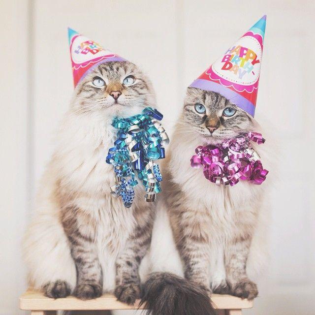 Best 25+ Crazy Birthday Wishes Ideas On Pinterest