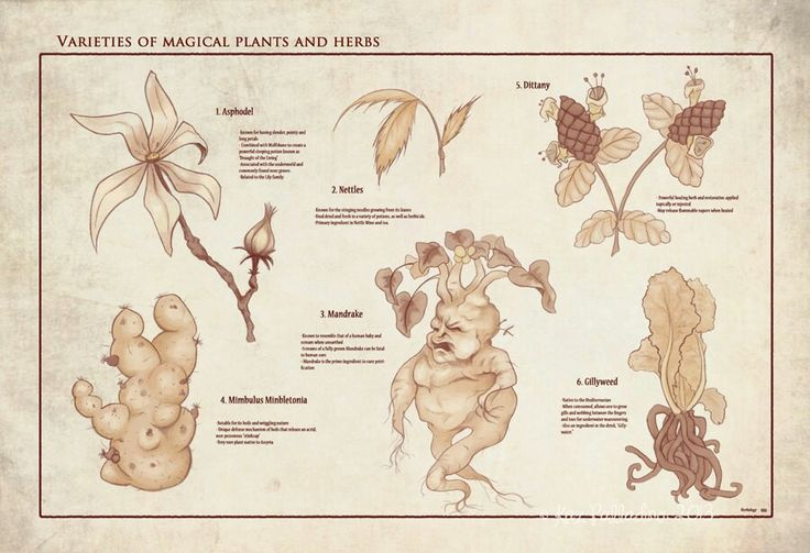 A selection of magical plants and herbs.