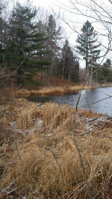 Beaver dam along the trail.