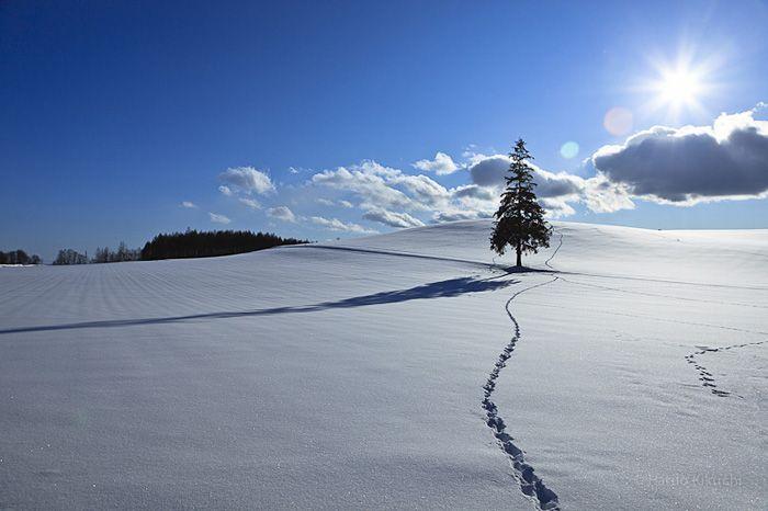 Powder in Furano, Hokkaido